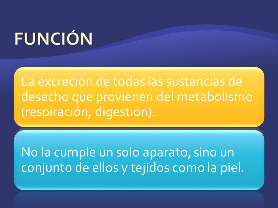 La excreción de todas las sustancias de desecho que provienen del metabolismo (respiración, digestión). No la cumple un solo aparato, sino un conjunto