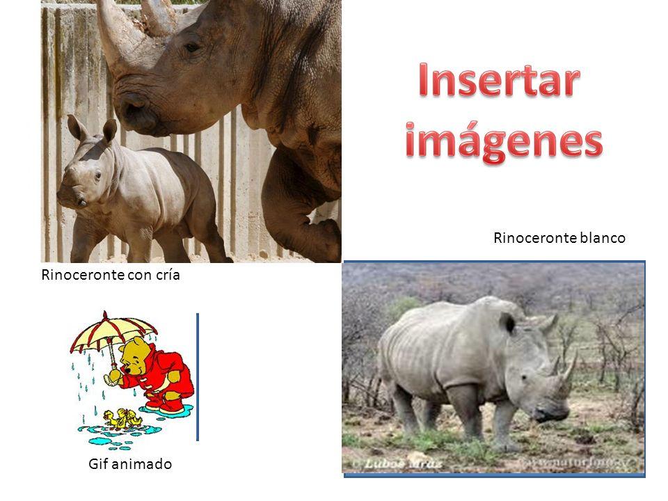 Gif animado Rinoceronte con cría Rinoceronte blanco