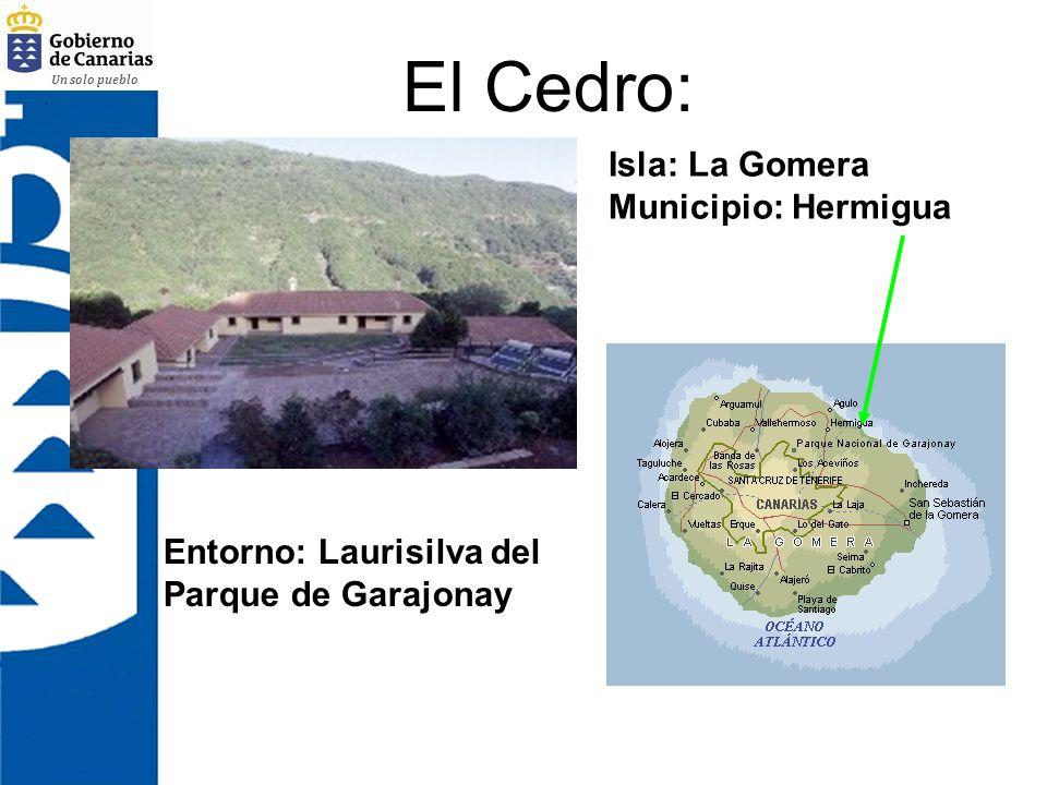 Un solo pueblo Barranco de la Arena Isla: Tenerife Municipio: La Guancha Entorno: Pinar de La Corona Forestal