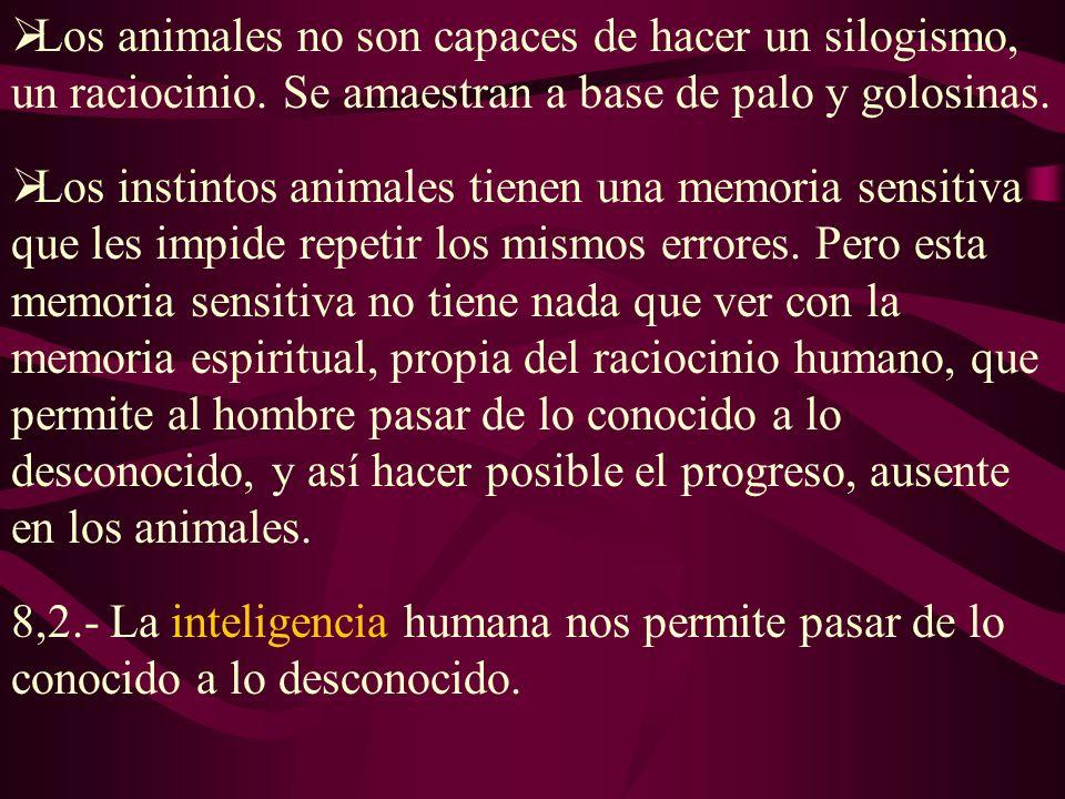 Los animales no son capaces de hacer un silogismo, un raciocinio.