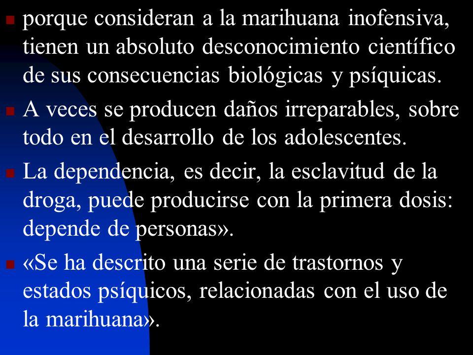 porque consideran a la marihuana inofensiva, tienen un absoluto desconocimiento científico de sus consecuencias biológicas y psíquicas. A veces se pro