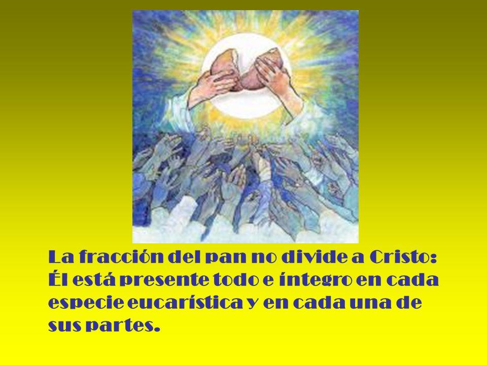 La fracción del pan no divide a Cristo: Él está presente todo e íntegro en cada especie eucarística y en cada una de sus partes.