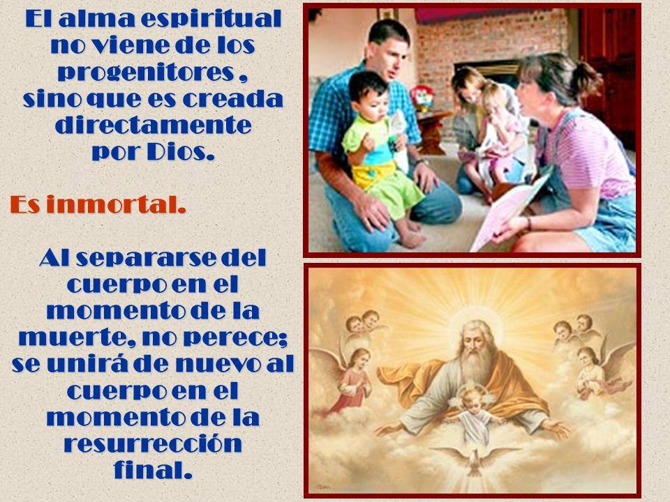 El alma espiritual no viene de los progenitores, sino que es creada directamente por Dios. Es inmortal. Al separarse del cuerpo en el momento de la mu