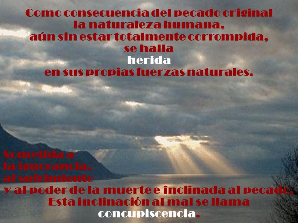 Como consecuencia del pecado original la naturaleza humana, aún sin estar totalmente corrompida, se halla herida en sus propias fuerzas naturales. Som