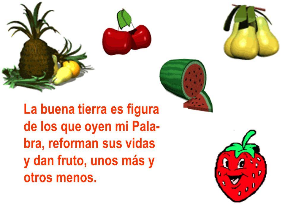 La buena tierra es figura de los que oyen mi Pala- bra, reforman sus vidas y dan fruto, unos más y otros menos.