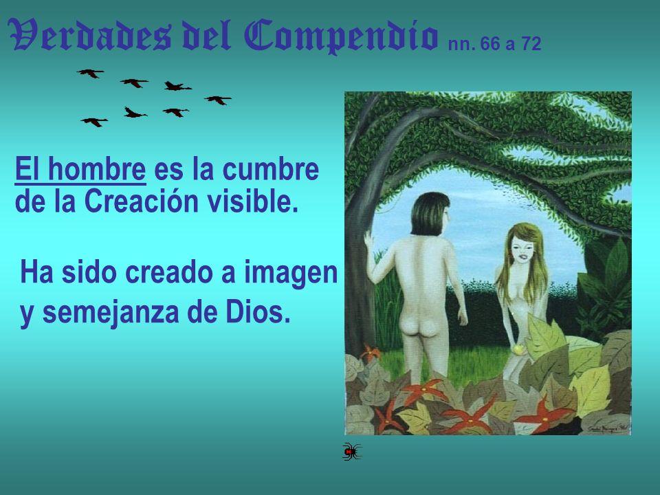 Verdades del Compendio nn. 66 a 72 El hombre es la cumbre de la Creación visible. Ha sido creado a imagen y semejanza de Dios.