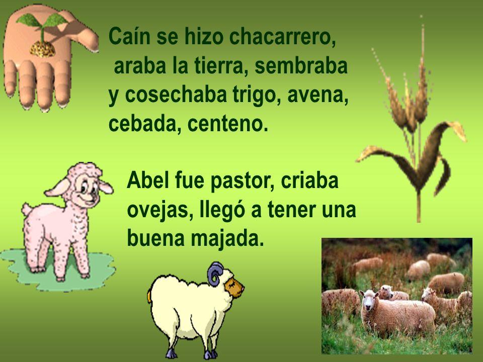Caín se hizo chacarrero, araba la tierra, sembraba y cosechaba trigo, avena, cebada, centeno. Abel fue pastor, criaba ovejas, llegó a tener una buena