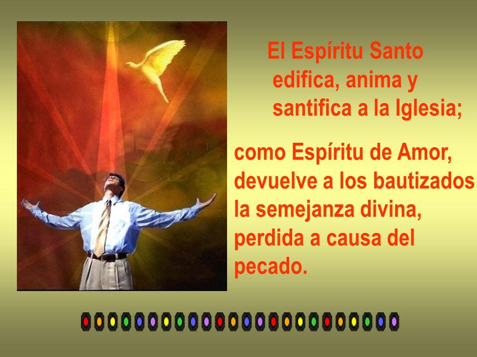 El Espíritu Santo edifica, anima y santifica a la Iglesia; como Espíritu de Amor, devuelve a los bautizados la semejanza divina, perdida a causa del p