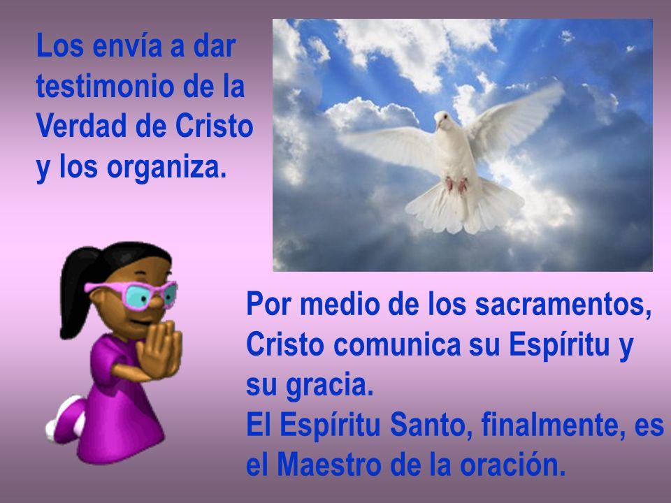 Los envía a dar testimonio de la Verdad de Cristo y los organiza. Por medio de los sacramentos, Cristo comunica su Espíritu y su gracia. El Espíritu S