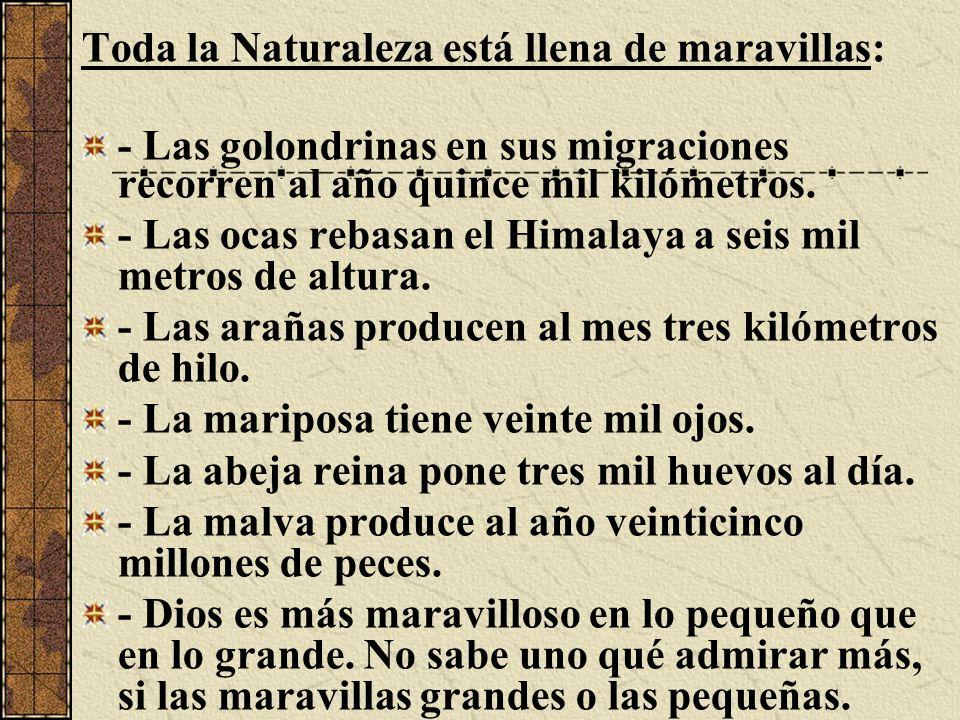 Toda la Naturaleza está llena de maravillas: - Las golondrinas en sus migraciones recorren al año quince mil kilómetros. - Las ocas rebasan el Himalay