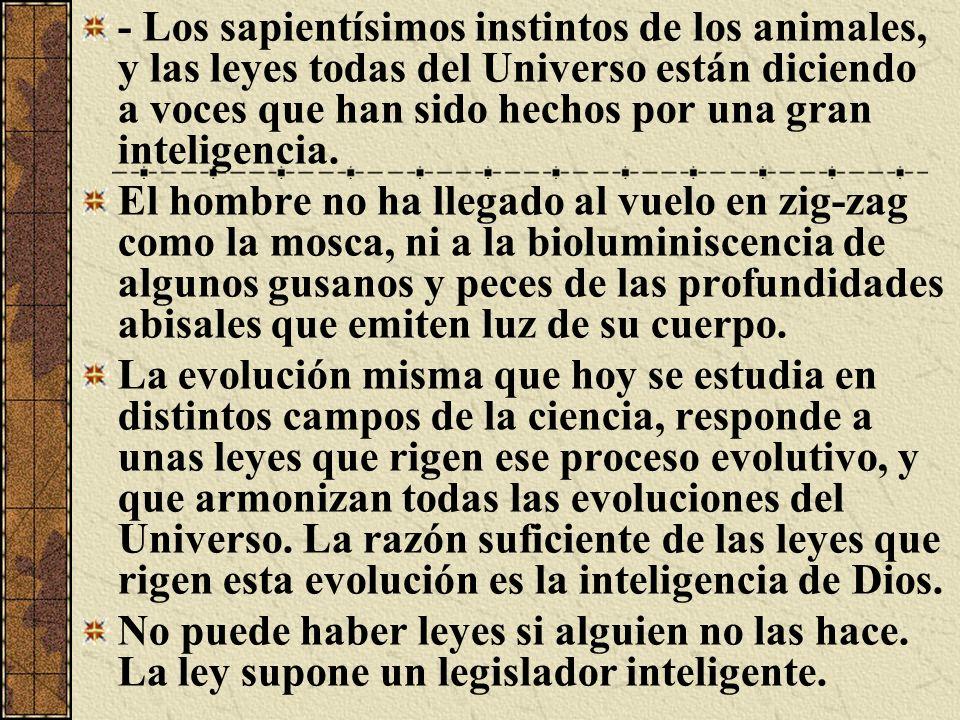 - Los sapientísimos instintos de los animales, y las leyes todas del Universo están diciendo a voces que han sido hechos por una gran inteligencia. El