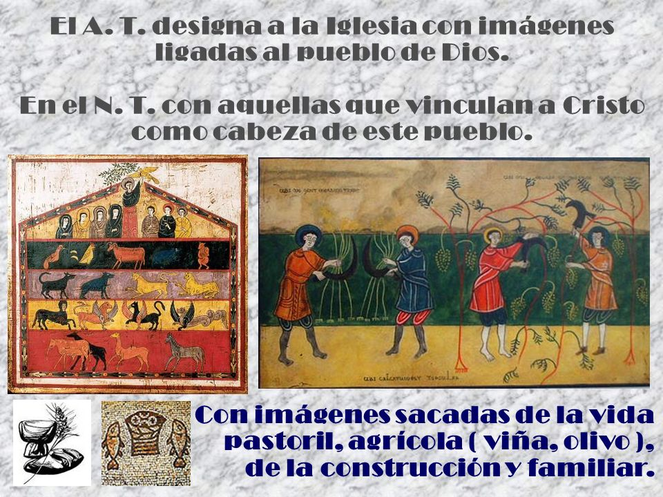 El A. T. designa a la Iglesia con imágenes ligadas al pueblo de Dios. En el N. T. con aquellas que vinculan a Cristo como cabeza de este pueblo. Con i