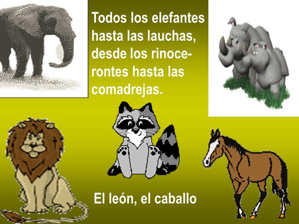 Todos los elefantes hasta las lauchas, desde los rinoce- rontes hasta las comadrejas. El león, el caballo