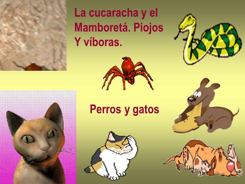 La cucaracha y el Mamboretá. Piojos Y víboras. Perros y gatos