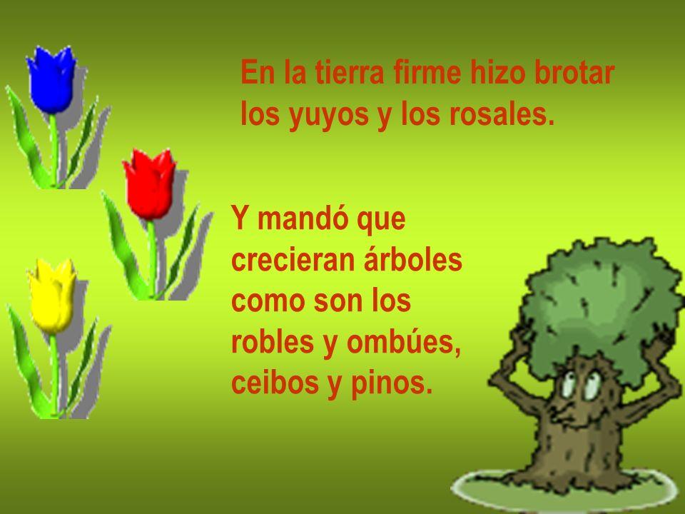 En la tierra firme hizo brotar los yuyos y los rosales. Y mandó que crecieran árboles como son los robles y ombúes, ceibos y pinos.