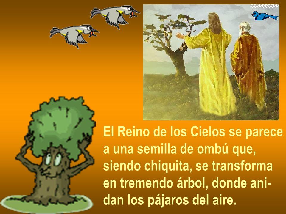 El Reino de los Cielos se parece a una semilla de ombú que, siendo chiquita, se transforma en tremendo árbol, donde ani- dan los pájaros del aire.