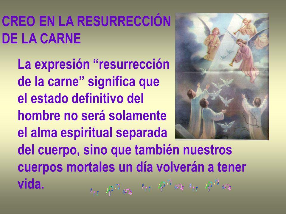 CREO EN LA RESURRECCIÓN DE LA CARNE La expresión resurrección de la carne significa que el estado definitivo del hombre no será solamente el alma espi