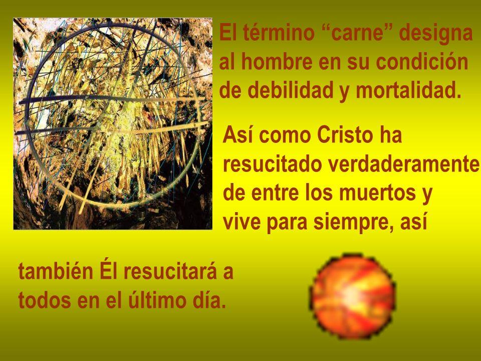 El término carne designa al hombre en su condición de debilidad y mortalidad. Así como Cristo ha resucitado verdaderamente de entre los muertos y vive