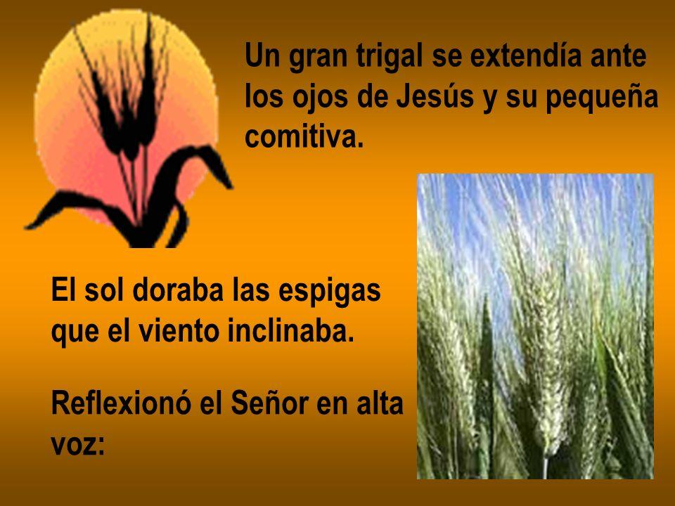 Un gran trigal se extendía ante los ojos de Jesús y su pequeña comitiva. El sol doraba las espigas que el viento inclinaba. Reflexionó el Señor en alt
