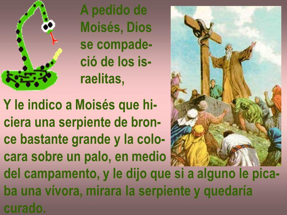 A pedido de Moisés, Dios se compade- ció de los is- raelitas, Y le indico a Moisés que hi- ciera una serpiente de bron- ce bastante grande y la colo-
