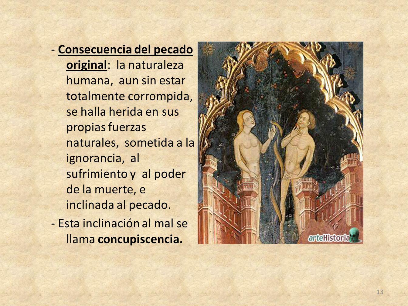 - Consecuencia del pecado original: la naturaleza humana, aun sin estar totalmente corrompida, se halla herida en sus propias fuerzas naturales, somet