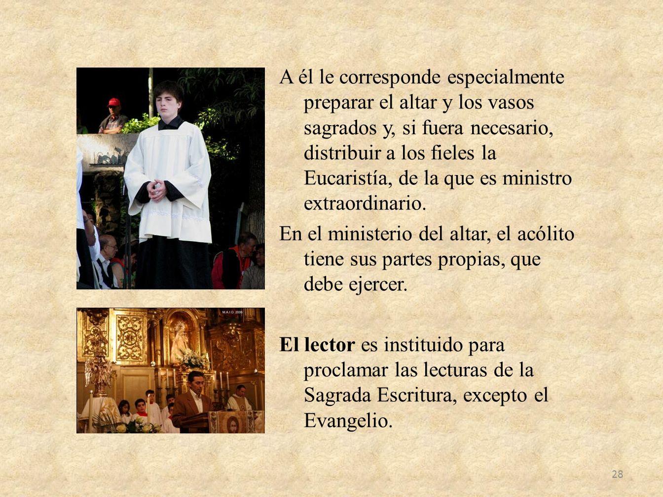 A él le corresponde especialmente preparar el altar y los vasos sagrados y, si fuera necesario, distribuir a los fieles la Eucaristía, de la que es mi