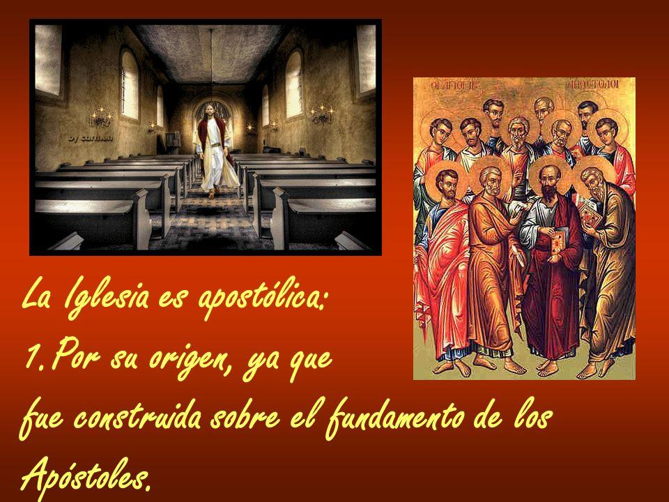 La Iglesia es apostólica: 1.Por su origen, ya que fue construida sobre el fundamento de los Apóstoles.