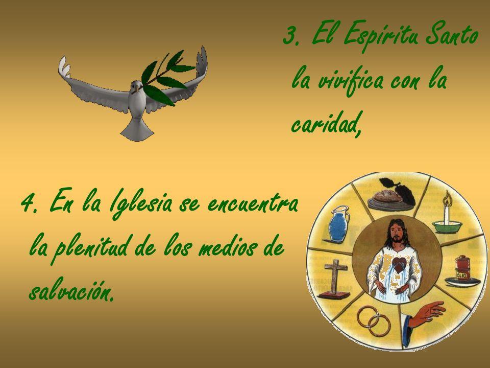 3. El Espíritu Santo la vivifica con la caridad, 4. En la Iglesia se encuentra la plenitud de los medios de salvación.