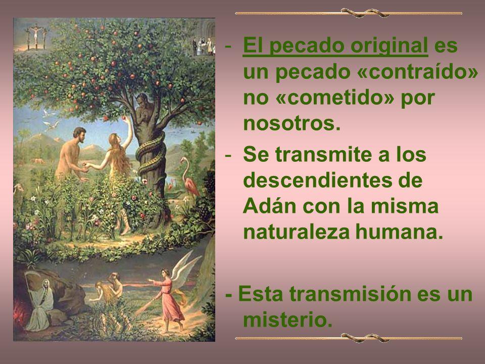 -El pecado original es un pecado «contraído» no «cometido» por nosotros.