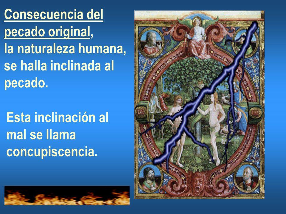 Consecuencia del pecado original, la naturaleza humana, se halla inclinada al pecado.