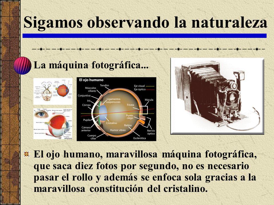 Sigamos observando la naturaleza La máquina fotográfica... El ojo humano, maravillosa máquina fotográfica, que saca diez fotos por segundo, no es nece