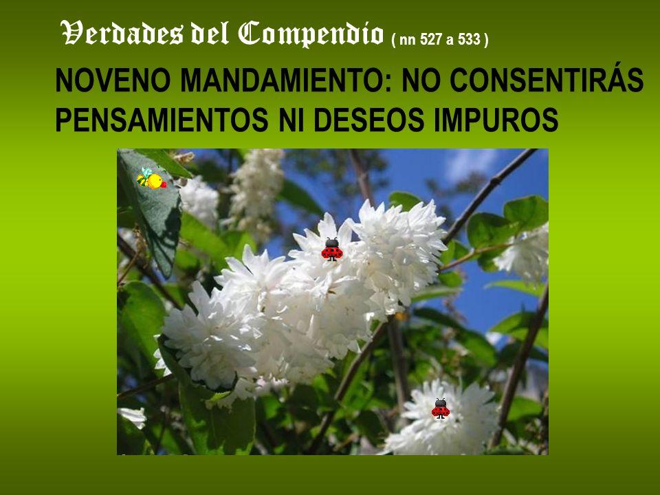 Verdades del Compendio ( nn 527 a 533 ) NOVENO MANDAMIENTO: NO CONSENTIRÁS PENSAMIENTOS NI DESEOS IMPUROS