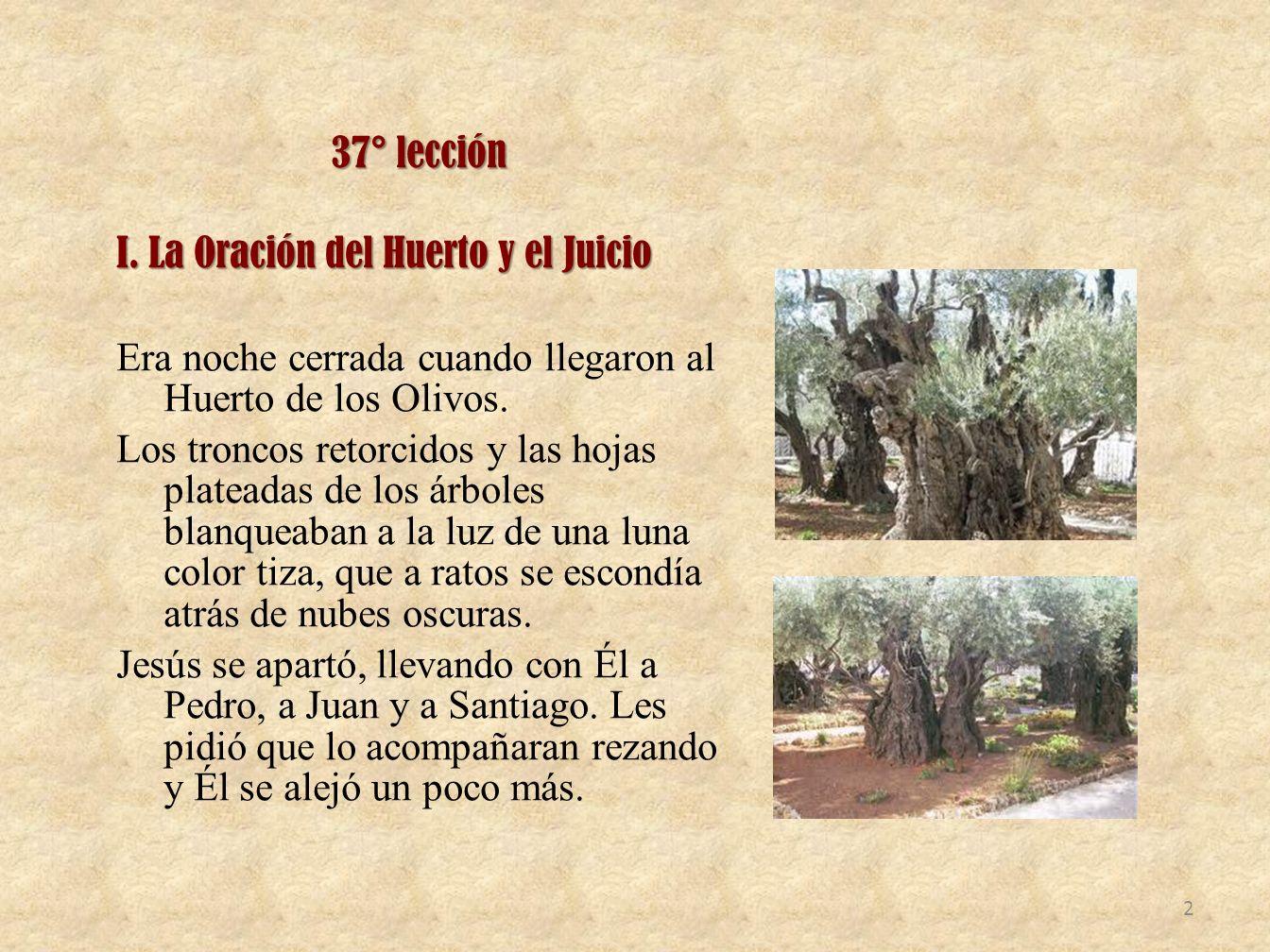 37° lección I. La Oración del Huerto y el Juicio Era noche cerrada cuando llegaron al Huerto de los Olivos. Los troncos retorcidos y las hojas platead