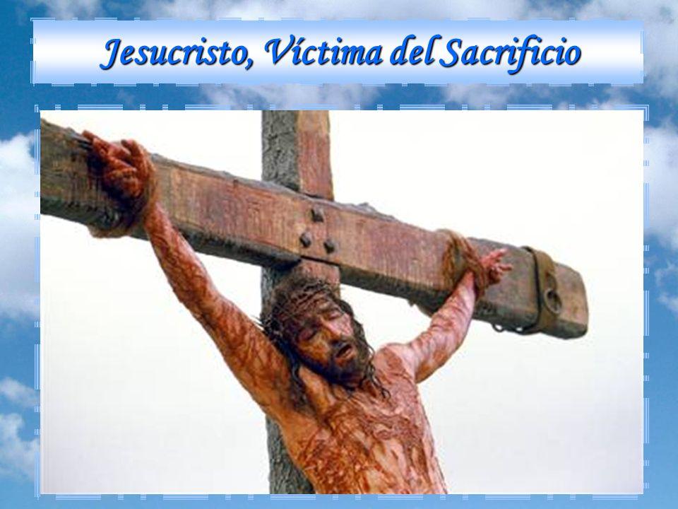 Cuando se construyó el Templo de Jerusalén, se pudieron llevar a cabo los sacrificios prescritos por Dios con gran dignidad. Toda esta multitud de sac