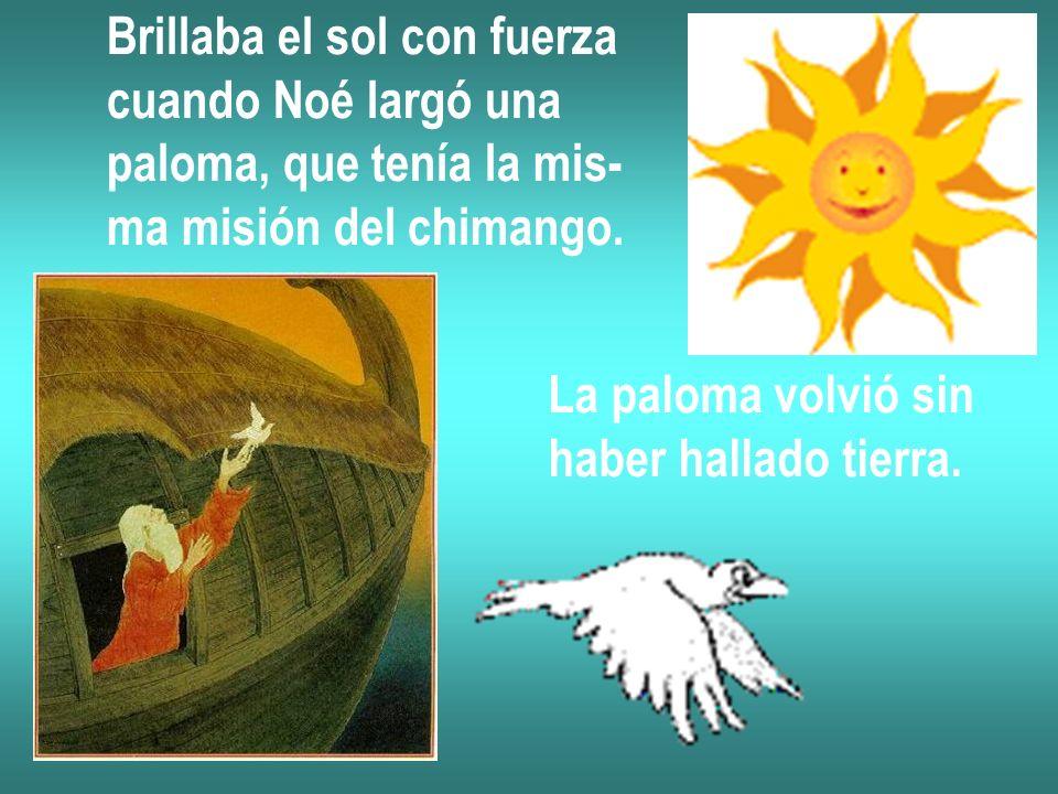 Brillaba el sol con fuerza cuando Noé largó una paloma, que tenía la mis- ma misión del chimango. La paloma volvió sin haber hallado tierra.