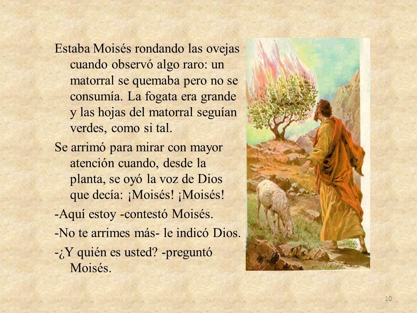 Estaba Moisés rondando las ovejas cuando observó algo raro: un matorral se quemaba pero no se consumía. La fogata era grande y las hojas del matorral