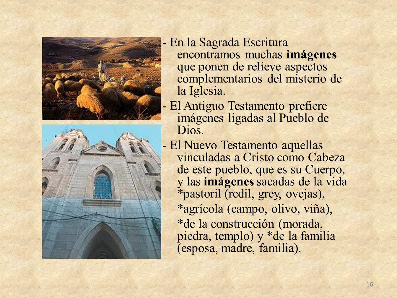 - En la Sagrada Escritura encontramos muchas imágenes que ponen de relieve aspectos complementarios del misterio de la Iglesia. - El Antiguo Testament