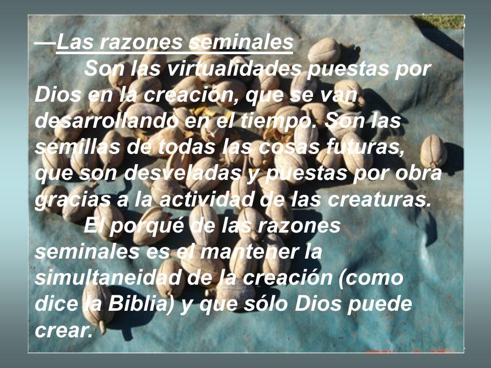 Las razones seminales Son las virtualidades puestas por Dios en la creación, que se van desarrollando en el tiempo. Son las semillas de todas las cosa