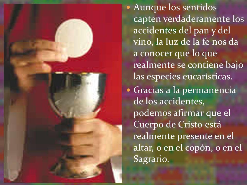 Aunque los sentidos capten verdaderamente los accidentes del pan y del vino, la luz de la fe nos da a conocer que lo que realmente se contiene bajo la