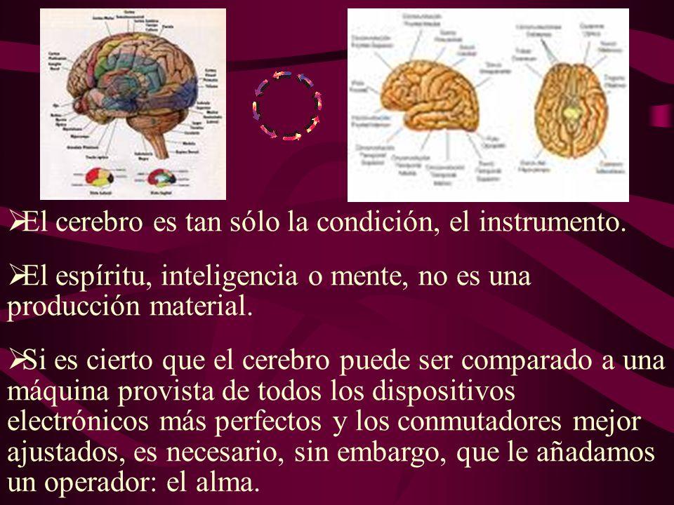 El cerebro es tan sólo la condición, el instrumento.