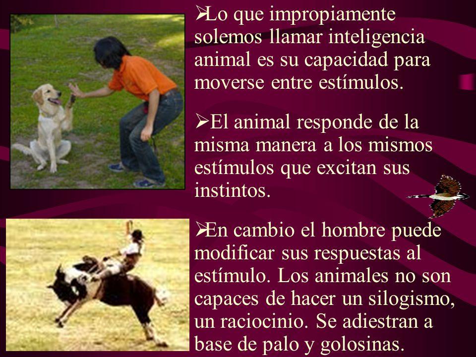 Lo que impropiamente solemos llamar inteligencia animal es su capacidad para moverse entre estímulos.