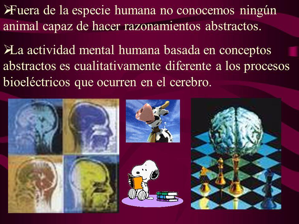 Fuera de la especie humana no conocemos ningún animal capaz de hacer razonamientos abstractos.