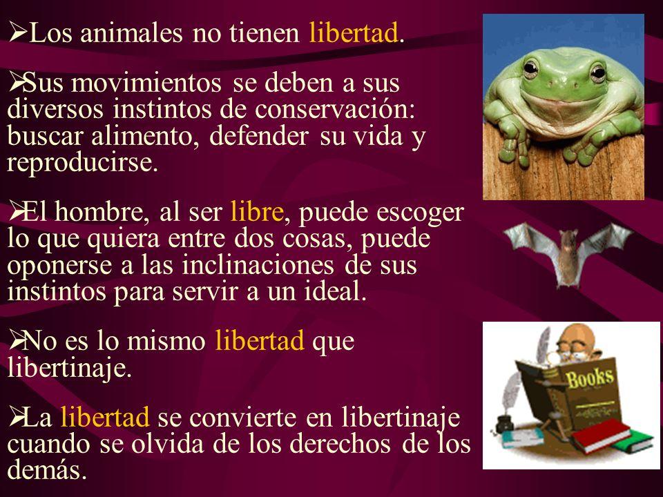 Los animales no tienen libertad.