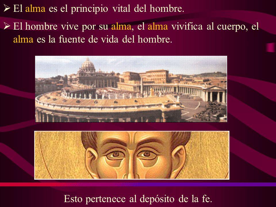 El alma es el principio vital del hombre.