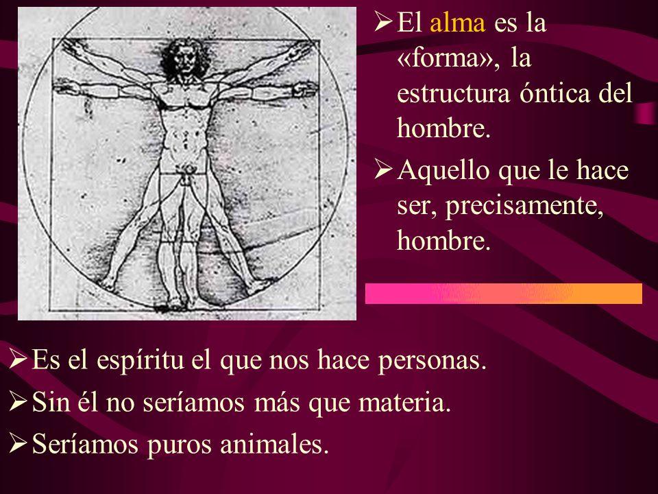 El alma es la «forma», la estructura óntica del hombre.