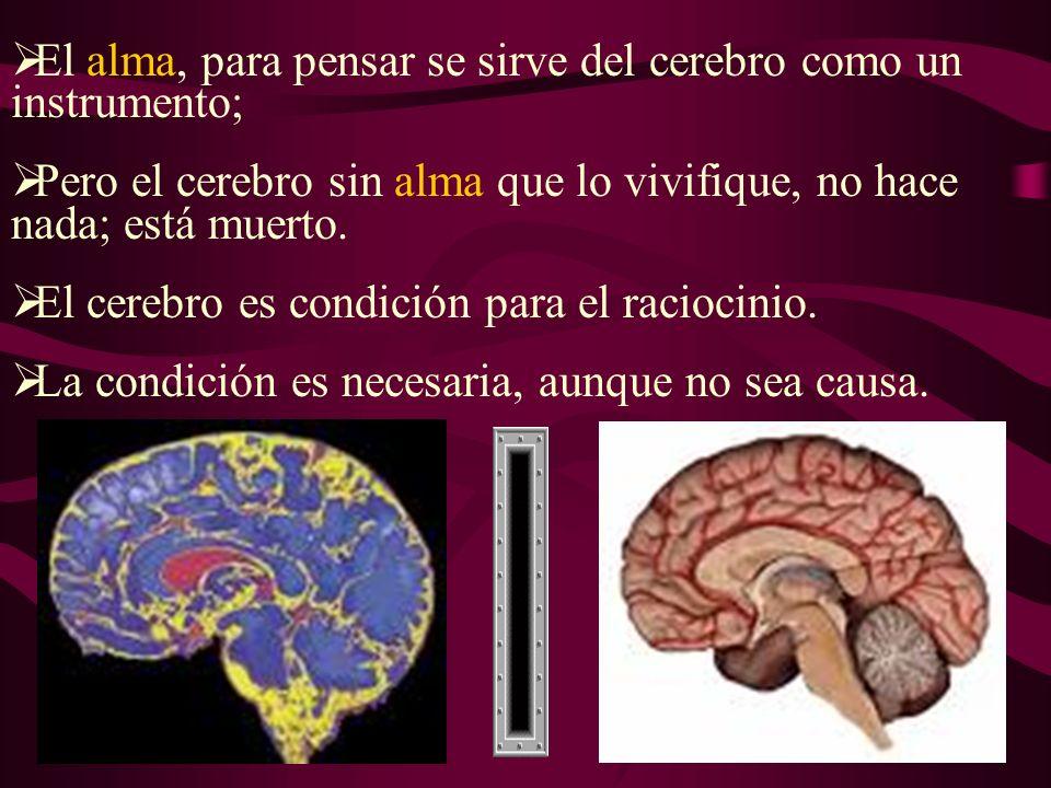 El alma, para pensar se sirve del cerebro como un instrumento; Pero el cerebro sin alma que lo vivifique, no hace nada; está muerto.