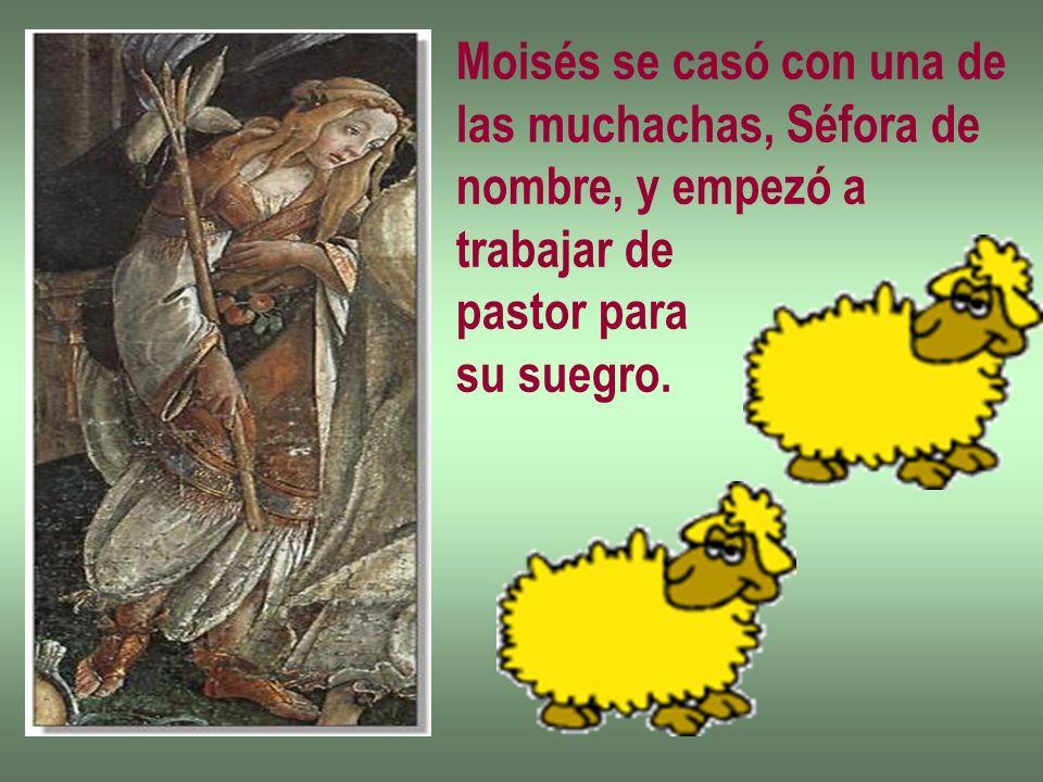 Moisés se casó con una de las muchachas, Séfora de nombre, y empezó a trabajar de pastor para su suegro.