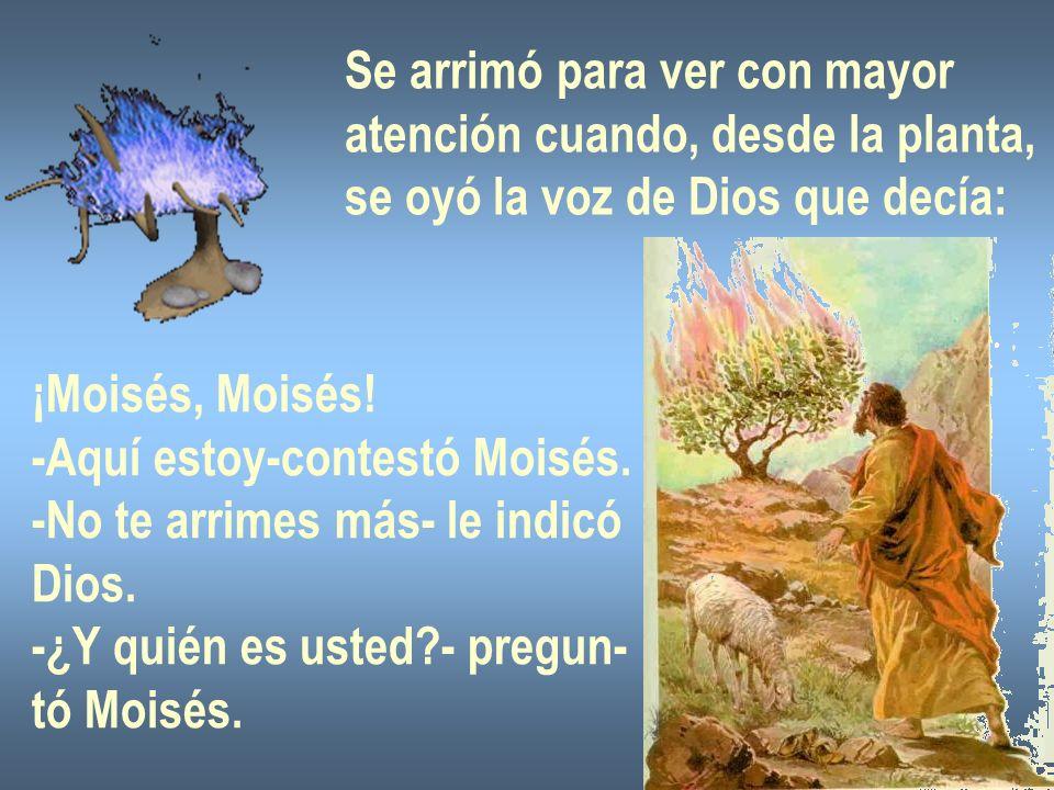 Se arrimó para ver con mayor atención cuando, desde la planta, se oyó la voz de Dios que decía: ¡Moisés, Moisés! -Aquí estoy-contestó Moisés. -No te a
