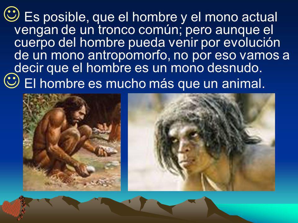 Es posible, que el hombre y el mono actual vengan de un tronco común; pero aunque el cuerpo del hombre pueda venir por evolución de un mono antropomor