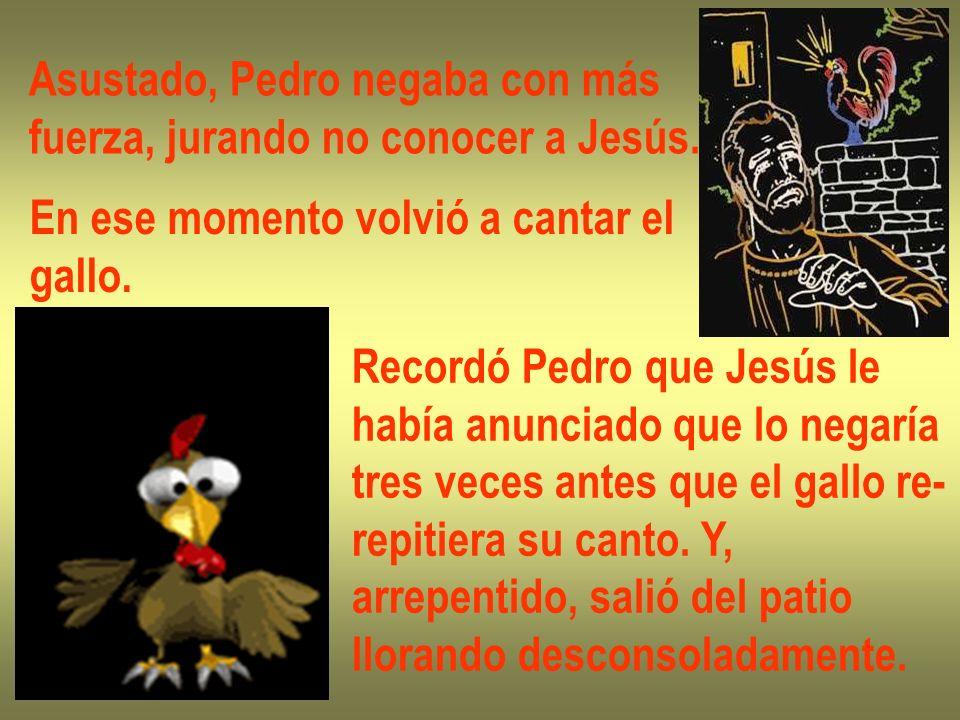 Asustado, Pedro negaba con más fuerza, jurando no conocer a Jesús. En ese momento volvió a cantar el gallo. Recordó Pedro que Jesús le había anunciado